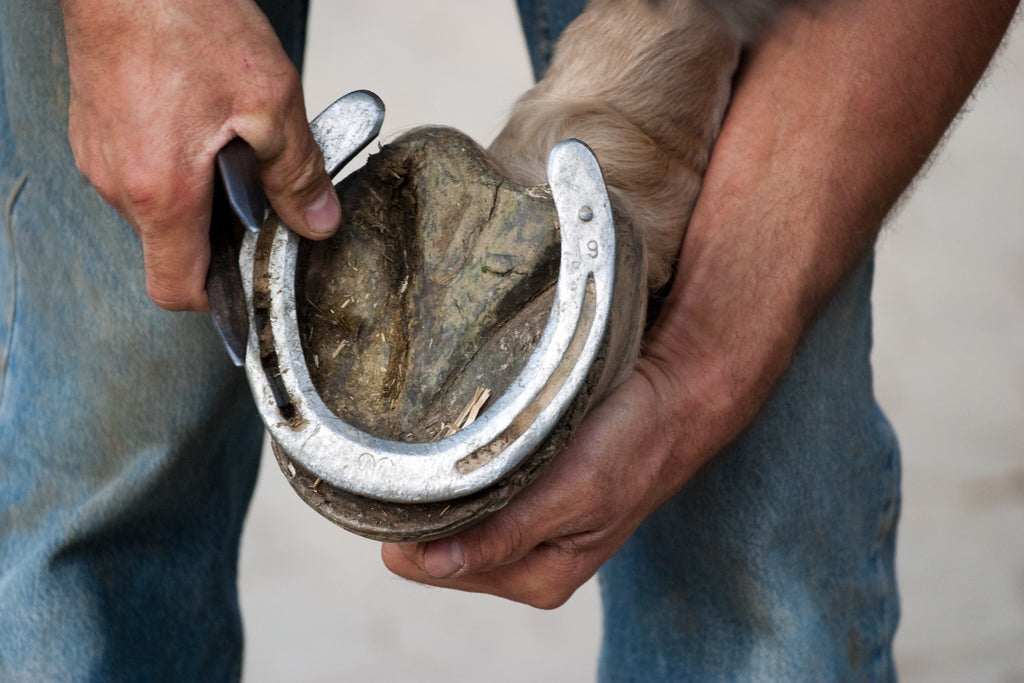 A farrier putting metal shoes on a horse's hoof