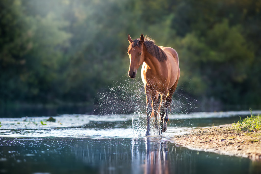 A brown horse splashing through a river