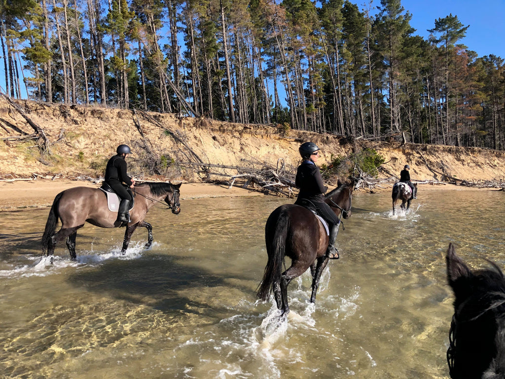 Black and brown horses riding through the water at the beach on a sunny day in Tasmania