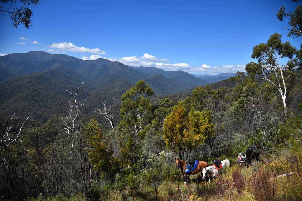 Horses riding through the mountains in Australia