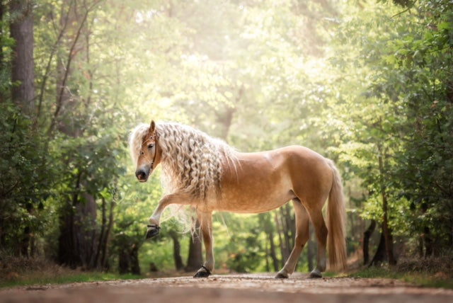 A beautiful brown horse wearing black Scoot Boots posing in the forest