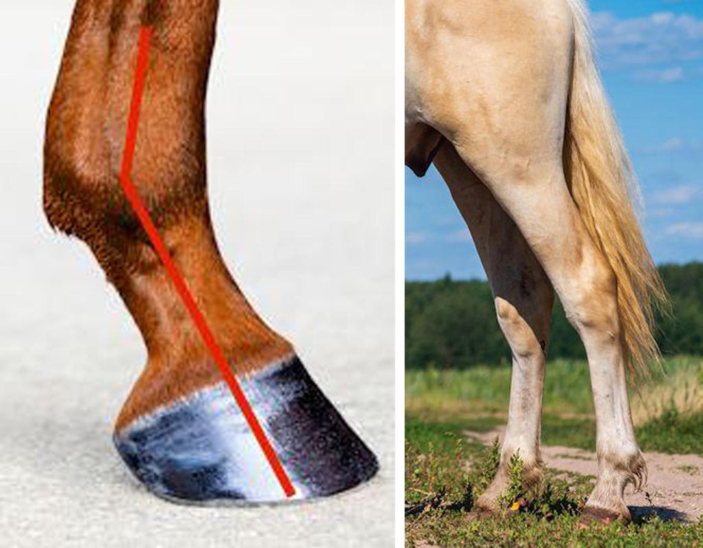 Healthy horse's lower limbs