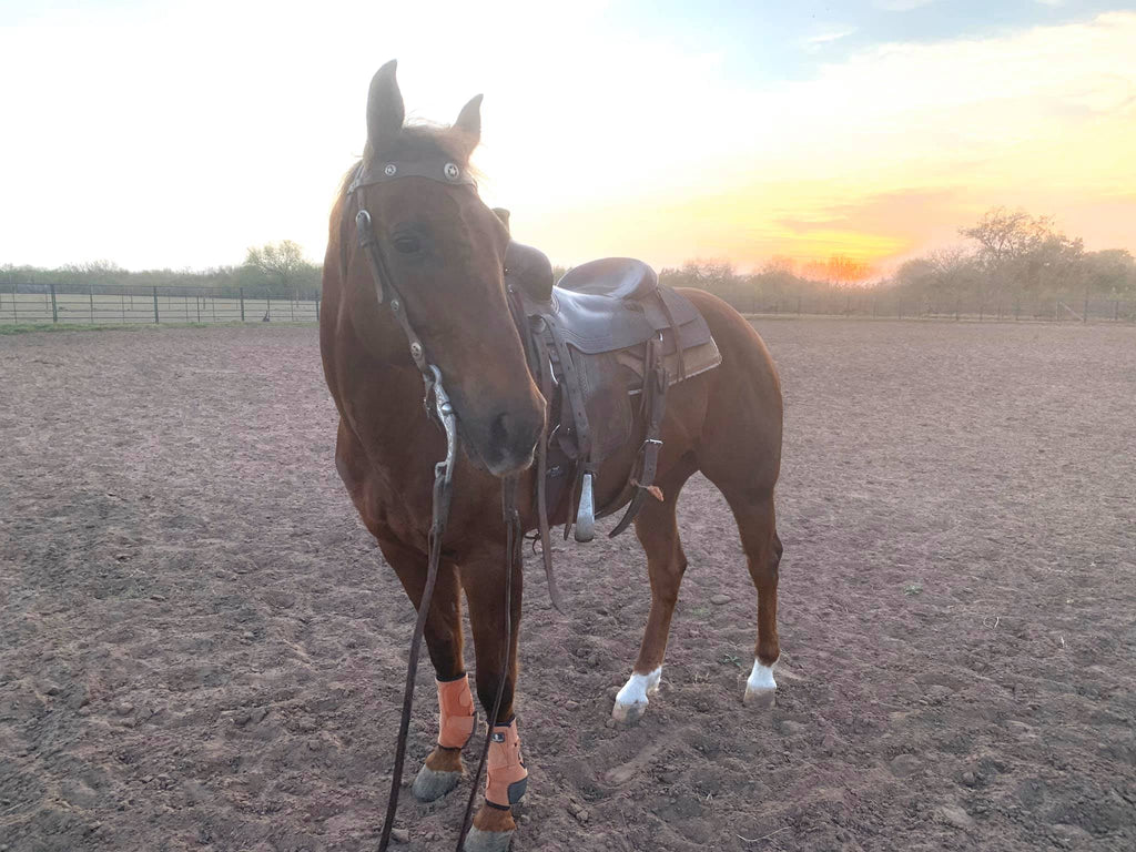 Does Your Horse Have Less Than Desirable Hooves? Barefoot Therapy May be the Answer!