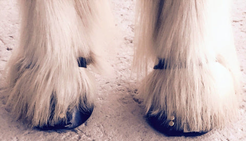 Feathered Hooves