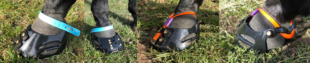 Four angles of a horse using vet wrap with their blue, orange and purple Scoot Boots as a rehabbing boot