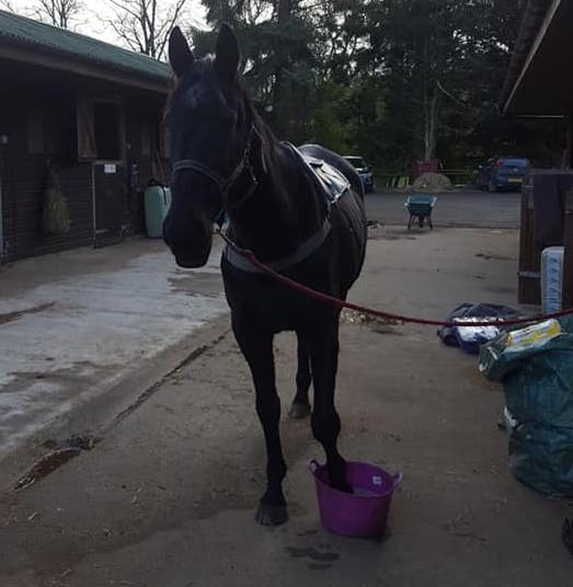 Is Your Horse Struggling with Cracks in Their Hooves? Barefoot may be the Answer!