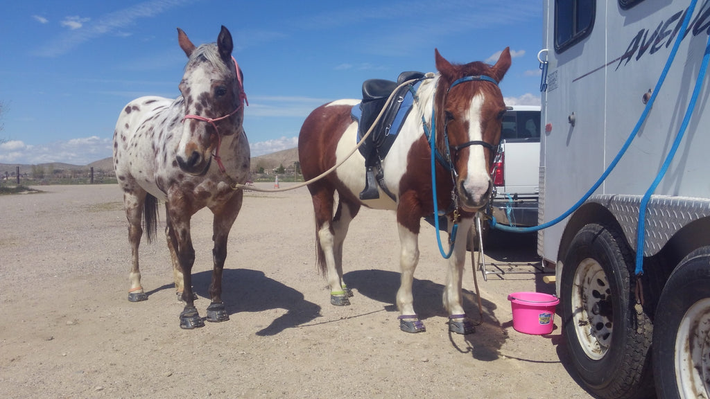 White and brown horses wearing Scoot Boots tied up to a horse float