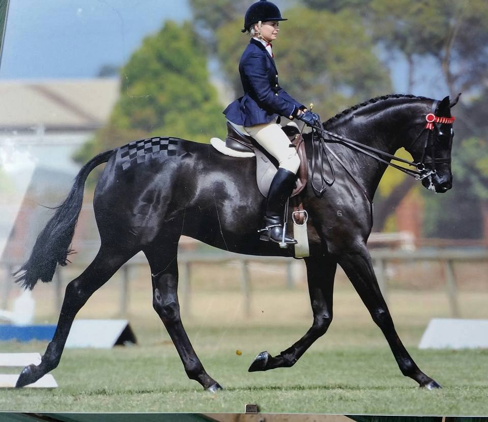 A black horse being ridden in a dressage competition