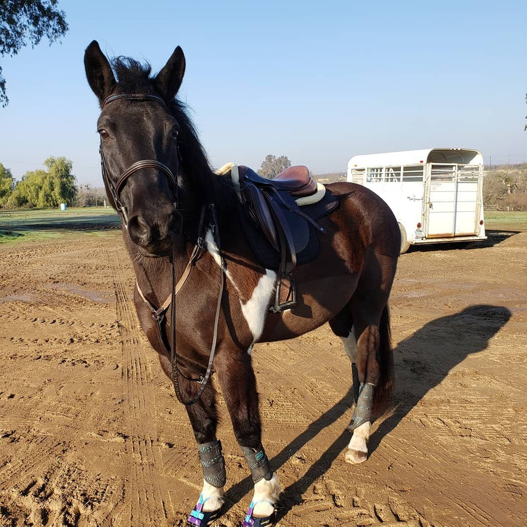 My Horse has Thin Soles, can Scoot Boots Make him More Comfortable?