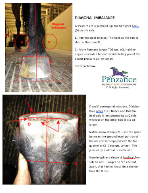 The explanation of a diagonally imbalanced hoof