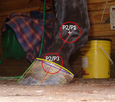 A diagonally imbalanced horse hoof