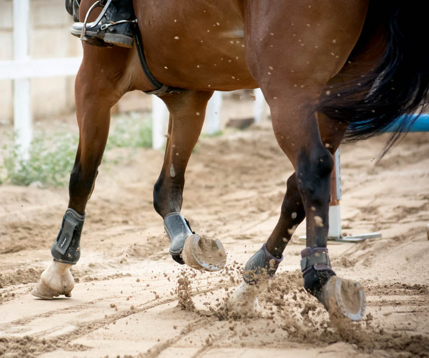 A horse in metal shoes trotting through a sand arena