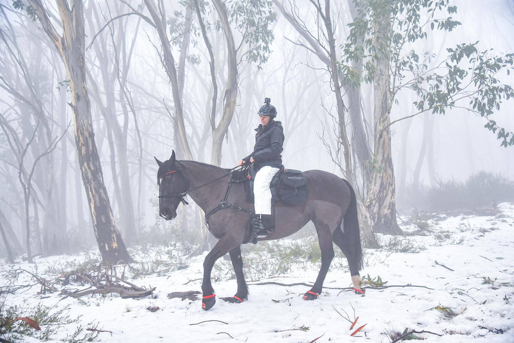 A brown horse wearing red Scoot Boots being ridden through snow surrounded by eucalyptus trees