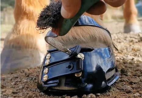 Is Your Horse Struggling With Thin Hoof Walls? Try Barefoot and Scooted!