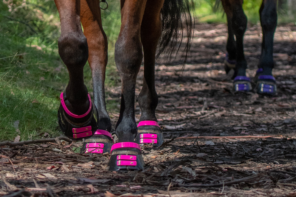 Black and brown horses wearing pink and purple Scoot Boots on a trail ride