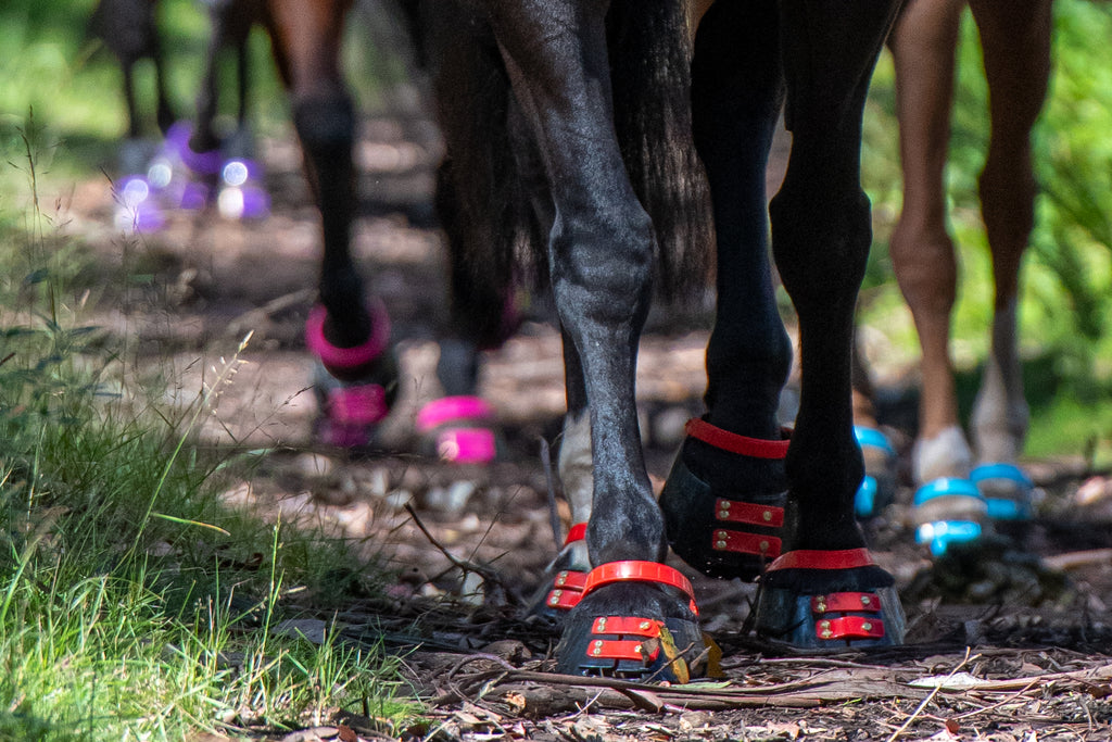 Horses wearing red, pink, purple and blue Scoot Boots on a trail ride