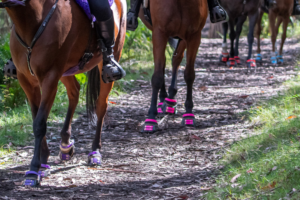 Horses wearing purple, pink, red and blue Scoot Boots on a leafy trail ride