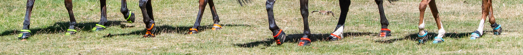 Horses wearing green, red, orange and blue Scoot Boots in grass