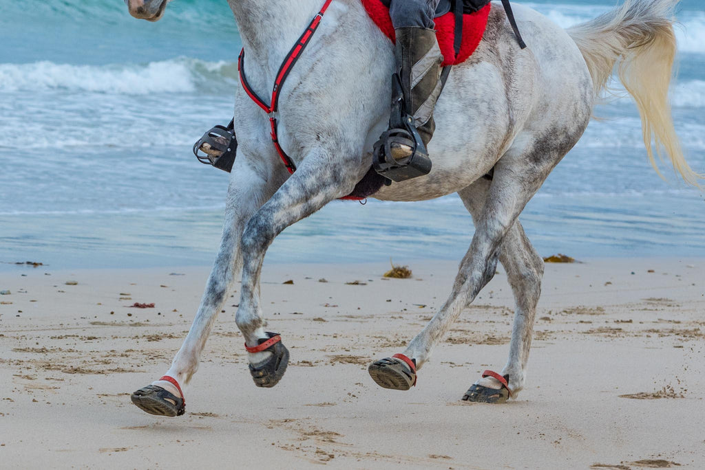 White and grey horse wearing red Scoot Boots galloping on a sandy beach