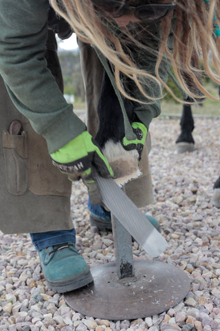A barefoot trimmer rasping the hoof wall in a barefoot trim