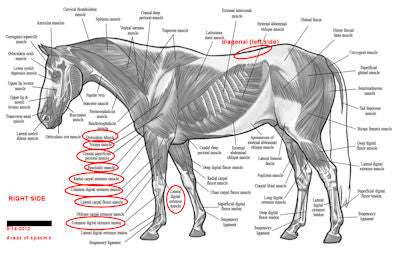 The evaluation of a horse needing chiropractic adjustments