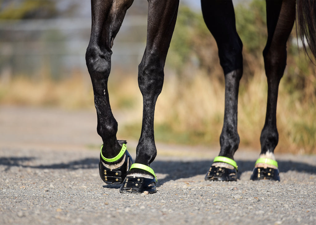 A black horse wearing green and black Scoot Boots on gravel