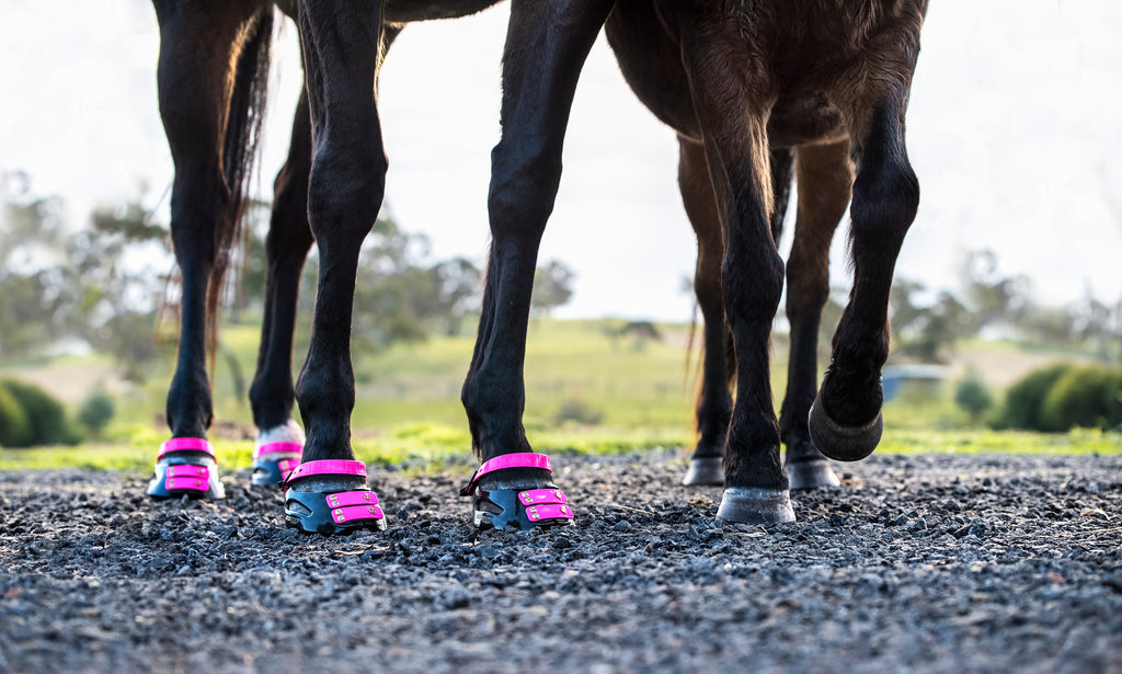 Two black horses wearing pink Scoot Boots on gravel