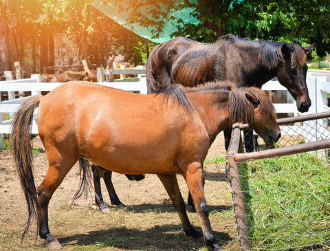 Early Signs of Laminitis and Effective Treatment