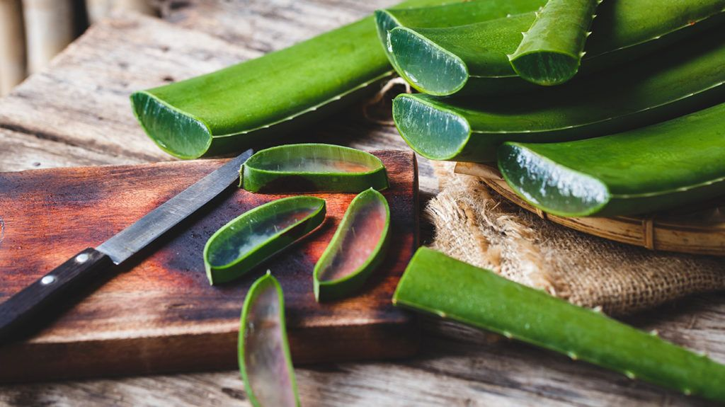 Nature's Medicine: Aloe Vera's History and Benefits