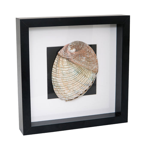 Black Frame Sea Shell 1