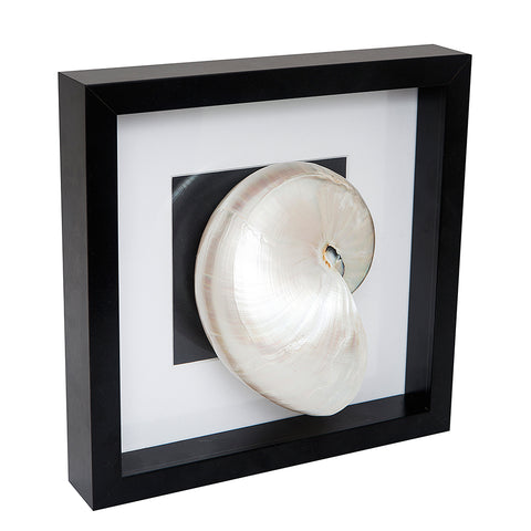 Black Frame Sea Shell 2