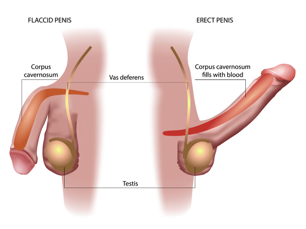 How To Increase Blood Flow To Your Penis