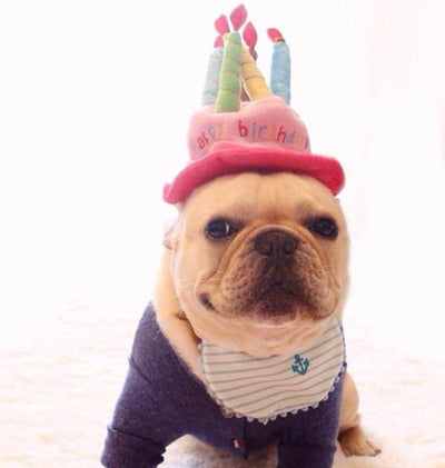 Happy Birthday Dog Hat