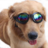 DoggyMarket Black Dog Sun Glasses