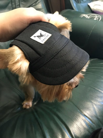 Dog Baseball Hat
