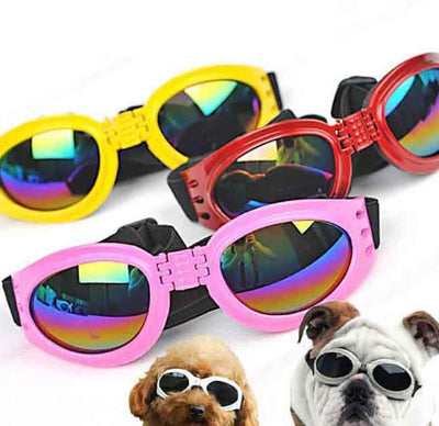 Dog Sun Glasses