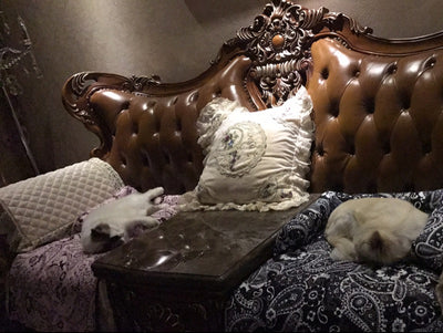 Dog Couch Bed