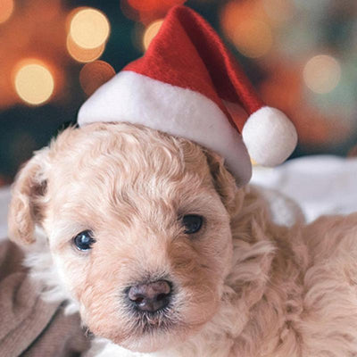 Dog Santa Christmas Hat