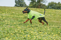 Comfitec Active Dog Coat Yellow