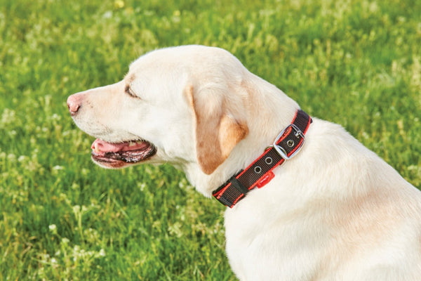 Therapy-Tec Dog Collar