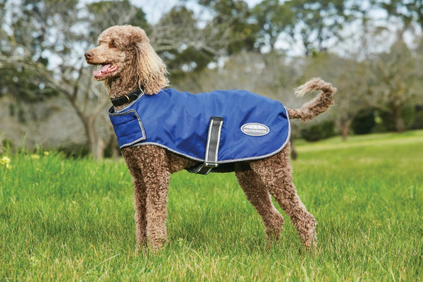 Windbreaker Dog Coat Navy