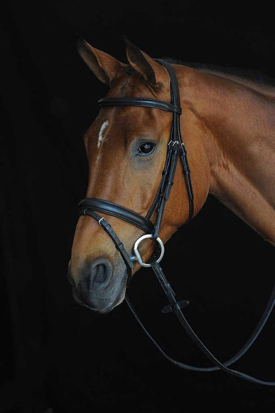 Collegiate Comfort Crown Padded Flash Bridle