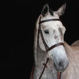 Collegiate Hunt Cavesson Bridle