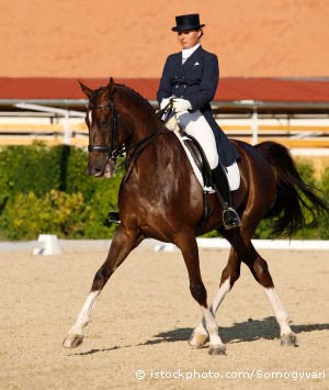 Dressage Products