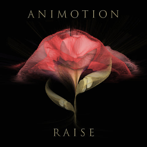 ANIMOTION Raise Your Expectations