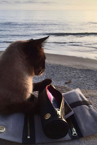 Cat next to Rogue Paq Ritual Case unrolled, on beach