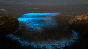 Southern California's Bioluminescent Waves