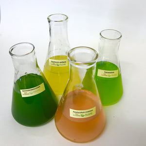 Filter Feeder Formula of microalgae is a blend of four Live Phytoplankton species.