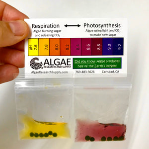Algae Beads in a Poly Bag