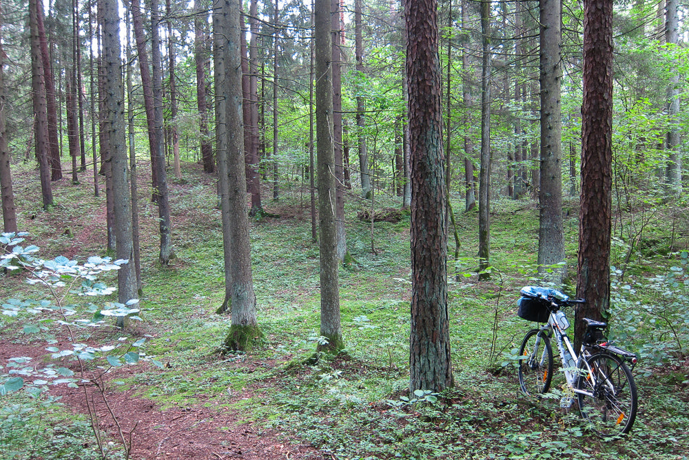 forest cycling - mushroom hunting with a bike